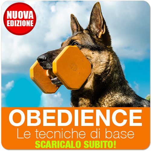 obedience le tecniche di base